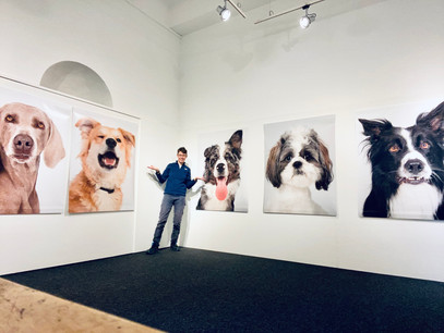 """In allestimento la mostra """"Espressioni da cani"""""""