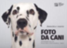 Foto da cani set fotografico per cani MA