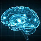 brain mapping.jpg