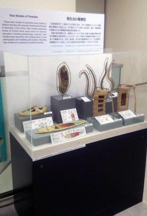 2階常設展示「寄生虫の蝋模型」リニューアル