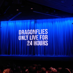 Dragonflies live only 24 hours