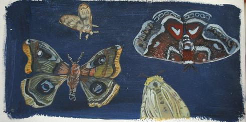 Moths, 2016