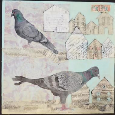 Birthday Pigeons, 2016