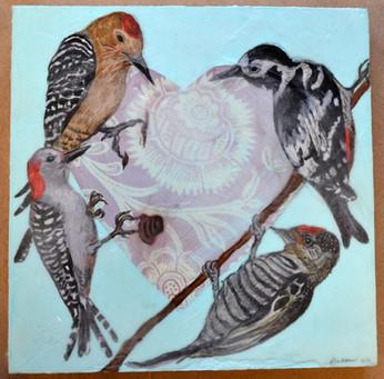 Woodpecker Valentine, 2016