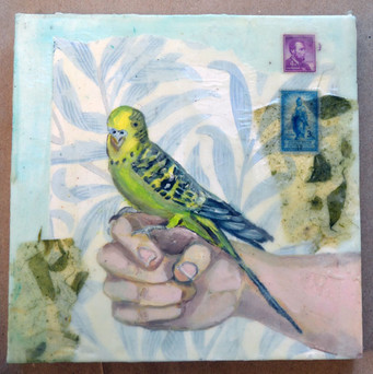 Letter from a Parakeet, 2015