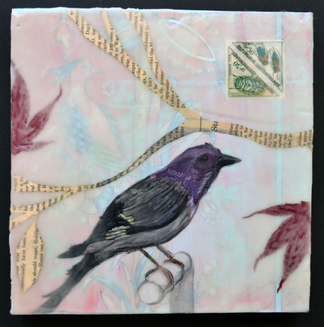 Purple Tanager, 2015