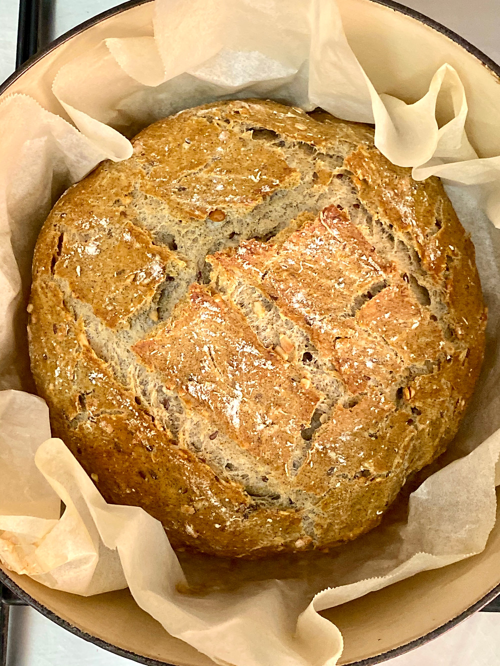 A whole wheat no kneading  bread made in a dutch oven