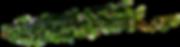 kisspng-plant-leaves-common-ivy-clip-art