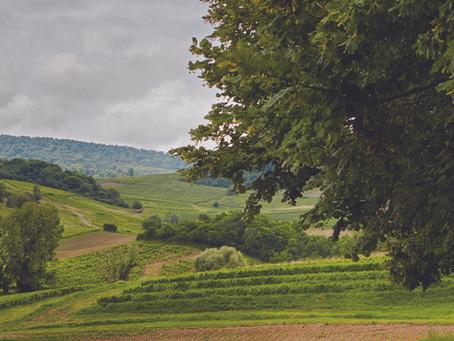 Les vins du Jura, c'est fait pour moi ?