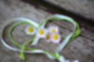 daisy-3392654.jpg