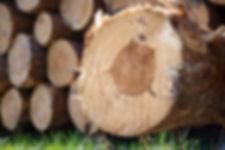 wood-1318921.jpg