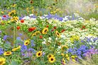 summer-blooms-index-1586215327.jpg