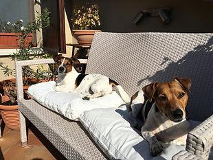 Rocco e Viola