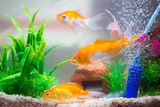 little-fish-fish-tank-aquarium.jpg