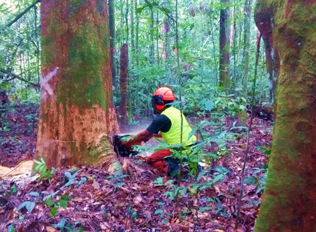 Quantifying uncertainty about forest recovery 32-years after logging in Suriname