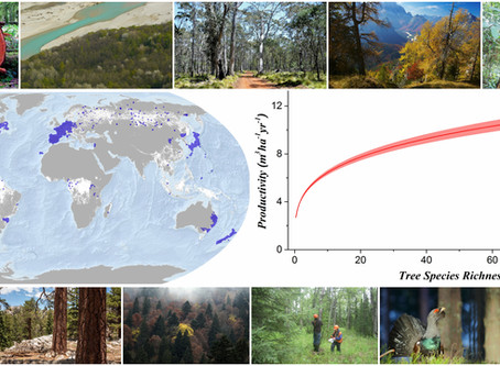 Forest Scholars Worldwide Team Up For Biodiversity Research