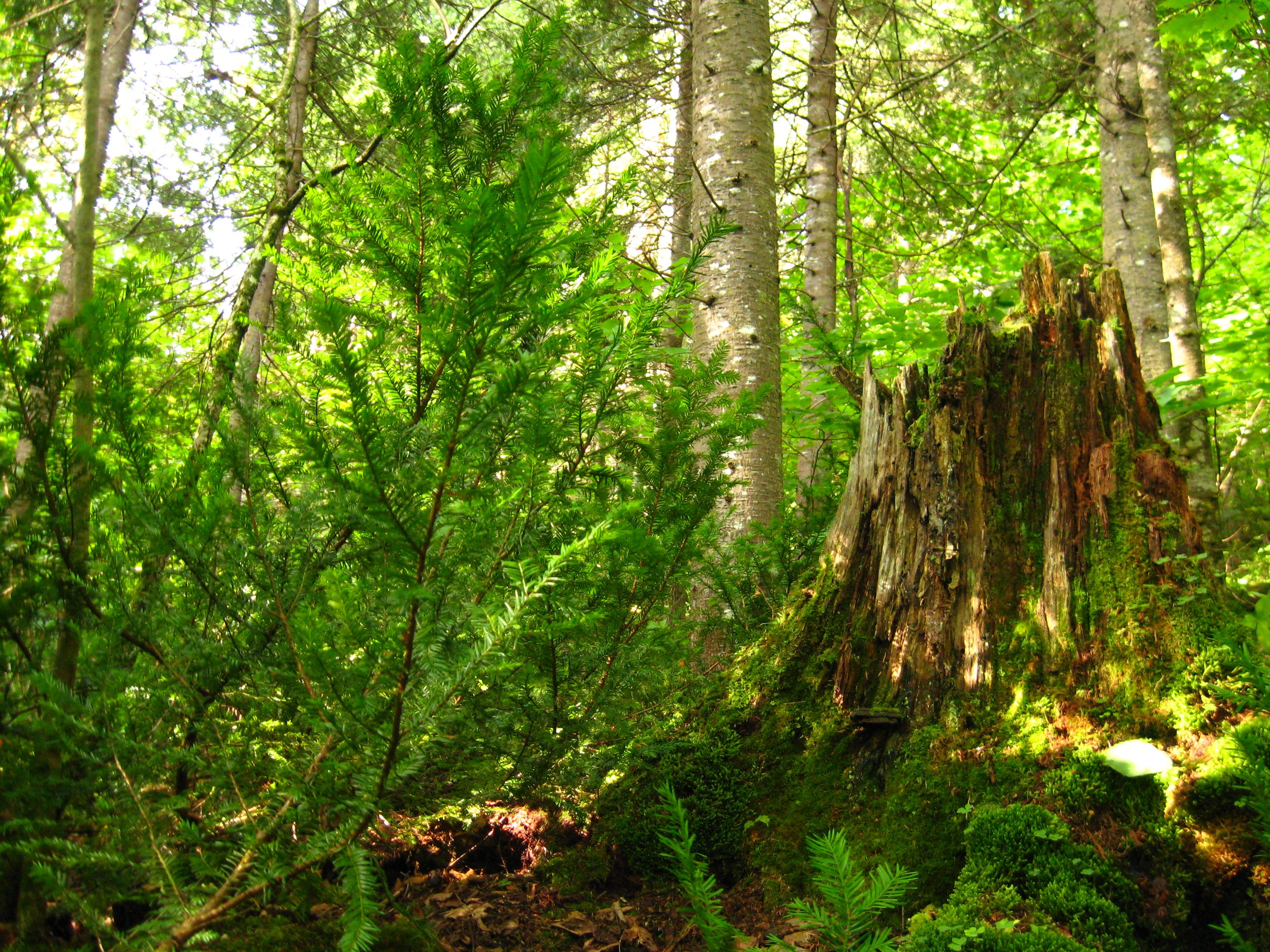 Forêt non coupée témoin