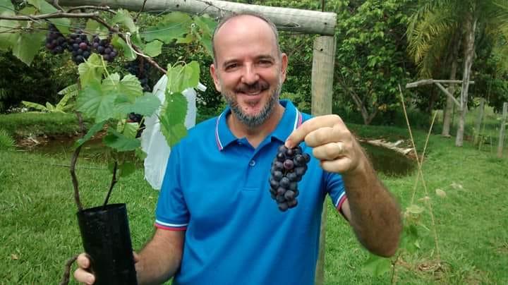 Muda parreira de uvas