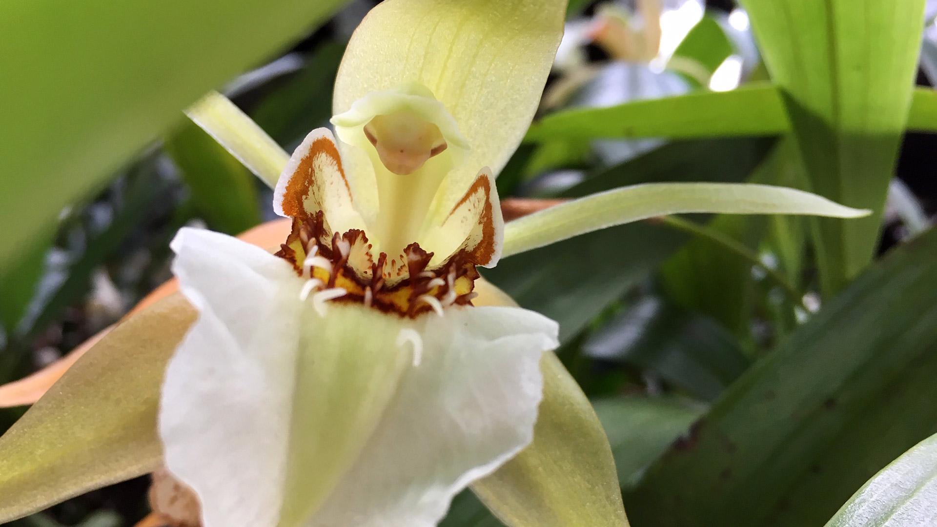 Paixões-botânicas-as-plantas-de-Burle-Ma
