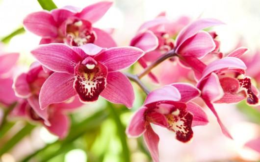 propagacao-das-orquideas-cursos-cpt