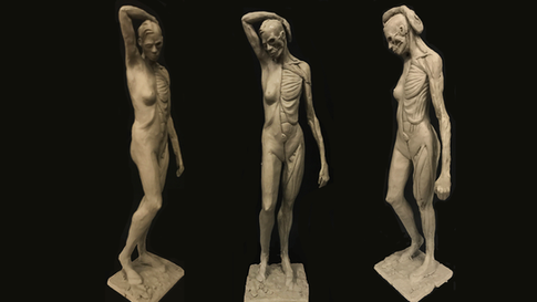Created in an Anatomy Workshop class with Andrew Cawrse at Anatomy Tools in Las Vegas Roma 2 clay, 1/3 human scale (WORK IN PROGRESS)