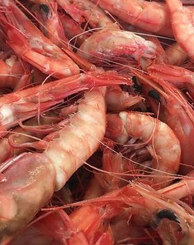 Royal-Red-Shrimp-2-1200x714.jpg