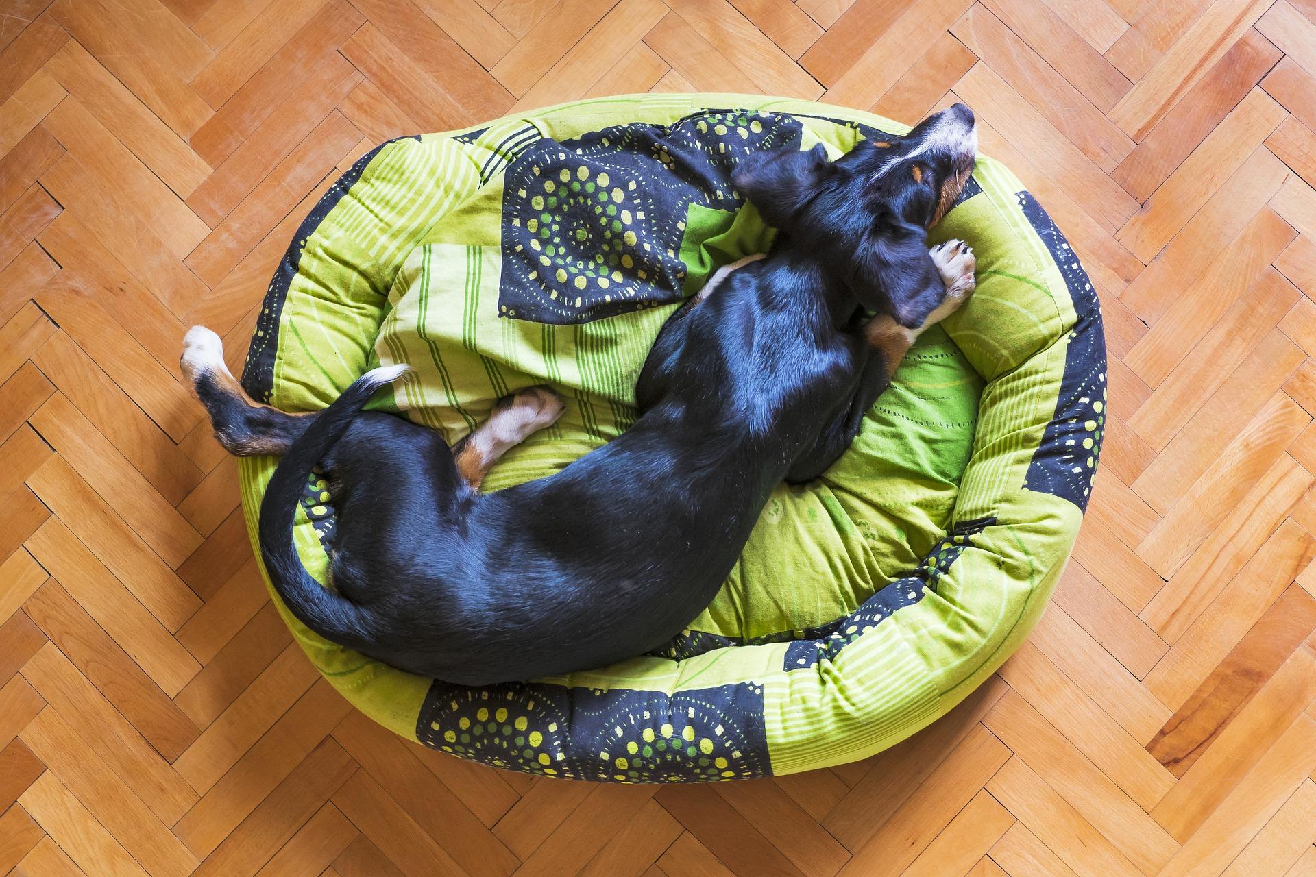 dog-sleeping-5216758_1920
