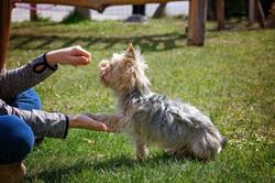 dog-training-5098572_1920