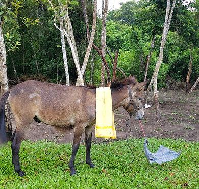 Horse lover's retreat