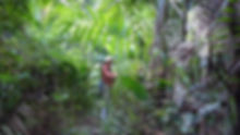 Trail in protected forest_800x450.jpg