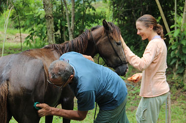 Love of Nourishment - caring for horse