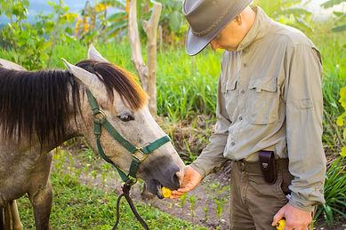 Equine therapy - Reiki - Love of Nourishment