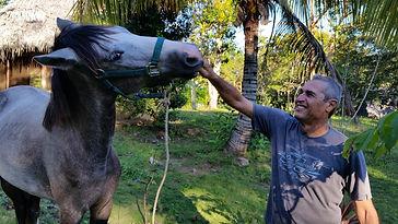 Horse lover's retreat - Love of Nourishment