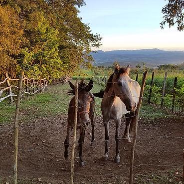 Tambo Ilusion - Horse lovers' retreat