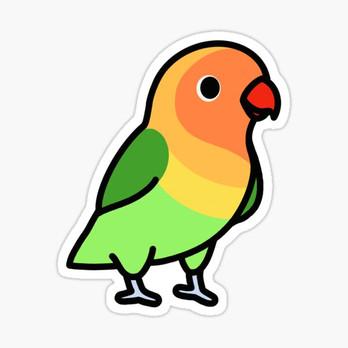 Fischer's Lovebird