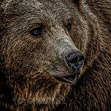 SKU 20.01.079 Beartalk.jpg