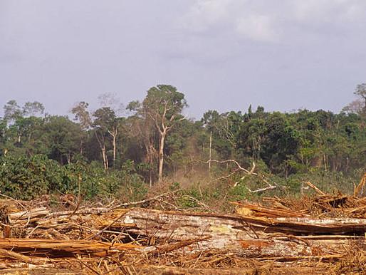 Apuntes sobre la implementación de la Ley de Bosques