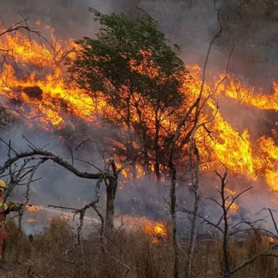 Ley de Fuego: un abordaje integral al problema de los incendios
