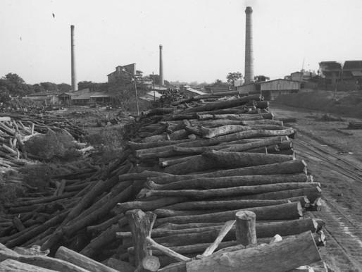 La Forestal y la deuda ambiental