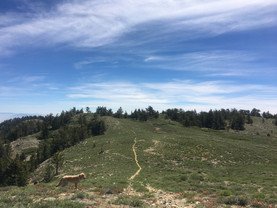 Mount Pinos camping trip with Leo, June 2017