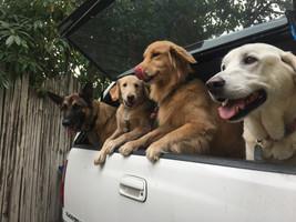 Dog squad: Radar, Leo, Skye & Bigs