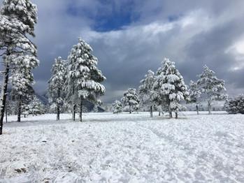 Snow Day @ Buffalo Park on the Arizona Trail in Flagstaff, January 2017