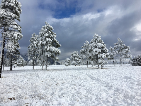 Snow Day @ Buffalo Park on the Arizona Trail in Flagstaff, January 2017