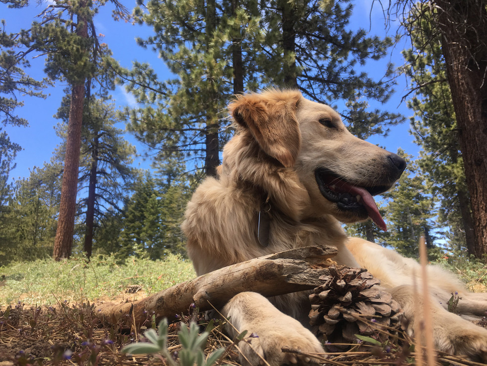 Leo @ Chula Vista Campground in the Los Padres National Forest, June 2017