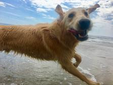 Leo is all joy at Thousand Steps Beach in Santa Barbara