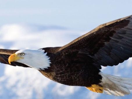 EAGLES SACRIFICED