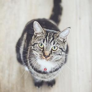 produit vétérinaire pour chat pharmacie