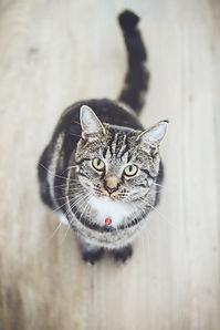 chat pharmacie vétérinaire médicament ch