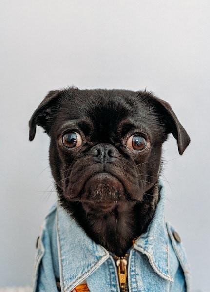 pourquoi mon chien tousse