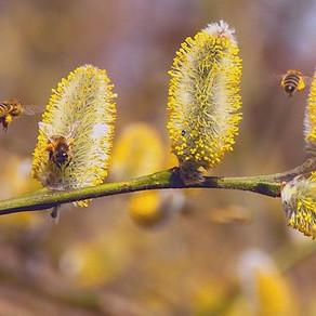 7 conseils pour se protéger des allergies du pollen (et tout comprendre)